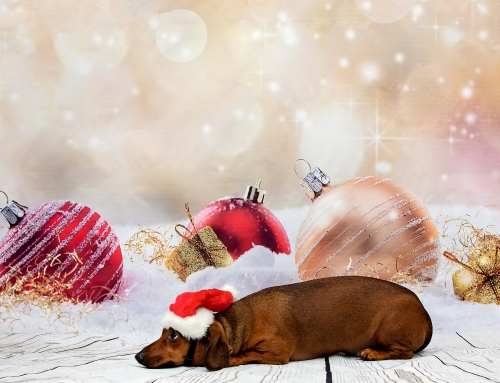 2019 Pet & Family Photos with Santa November 30 and December 7 at the Dils Center